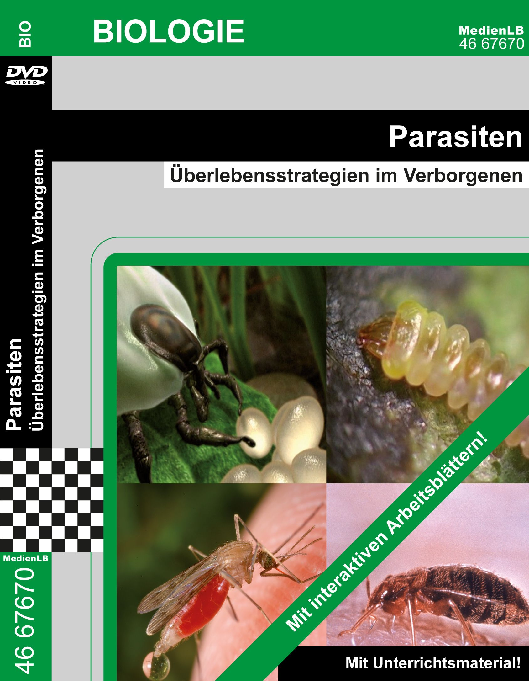 Die Pilze die Parasiten aus der Klasse sumtschatych der Pilze