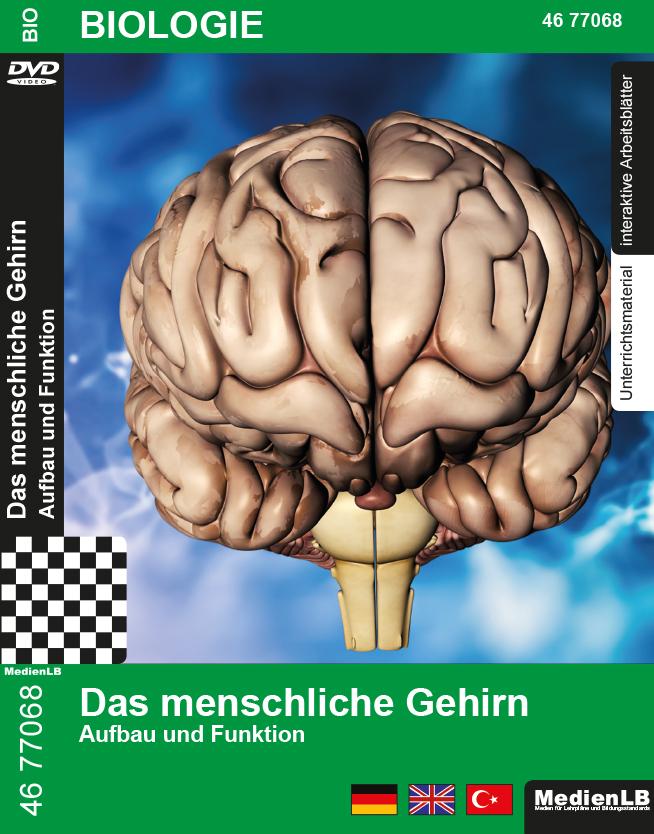 Das menschliche Gehirn - DVD - MedienLB