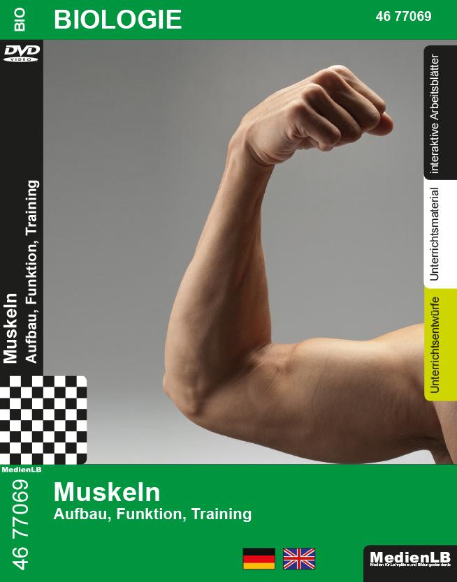 Berühmt Kennzeichnung Muskeln Des Körpers Zeitgenössisch ...